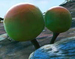 Giant Ballmoss