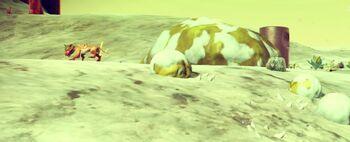 Icy Rockslug Wild 4