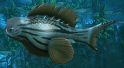 Dredger Fish