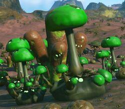 Fungal Cluster Kobastl Tau