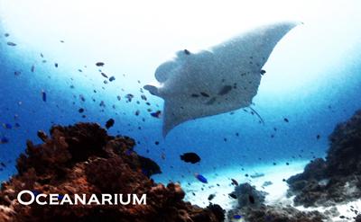 File:Oceanarium.jpg