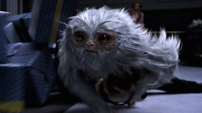 What Are the Beasts in 'Fantastic Beasts'? (UPDATED)