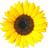 Iceice33's avatar