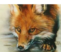 Elder Fox