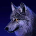 Wolfeyy