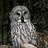 Herowl's avatar