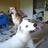 DaWolf-Llama827's avatar