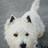 Drachenbein's avatar