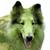 The Watermelon Dog