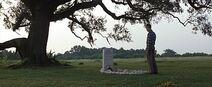 Forrest-gump-jenny-grave