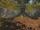 Гильдейский Лес