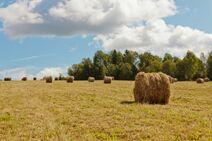 East hayfield