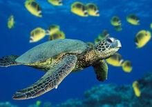 Turtle profilePic