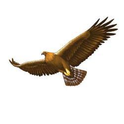 Endorian(Great)Eagles