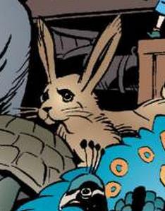 I6 Hare