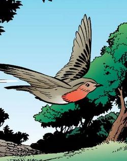Iss8 Cock Robin