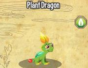 Plant dragon lv1-3