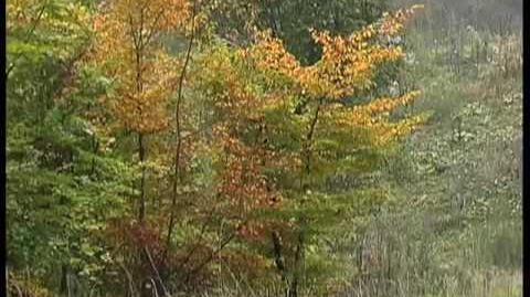 Four Seasons - Autumn - Vivaldi