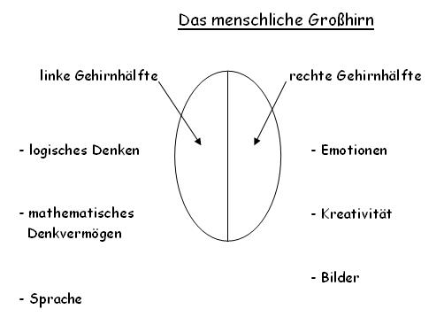 Grosshirn
