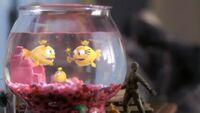 FOP-Movie-Fishbowl