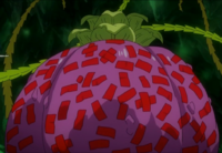 Le bulbe