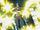 Caprico esquive toutes les attaques.jpg