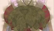 Herbes Yakobe abimées