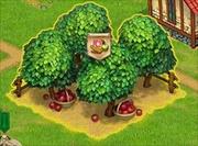 Apple garden done