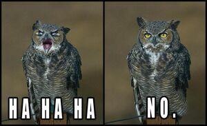 Hahaha No Owl