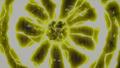 Szczęka Smoka Błyskawic