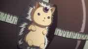 Roll Hedgehog
