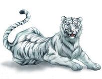 White Tiger-0