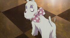 Mep dog