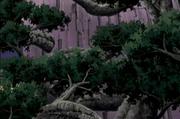 Wood Gods Great Tree Birth