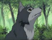 Akira's Dog