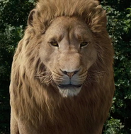 Aslan Lionheart