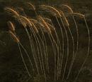 Node: Grain