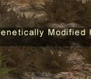 Node: Genetically Modified Heart