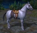 Officer´s Cavalry Horse