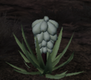 Node: Vegetable