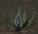Enemy: Hydra Weed
