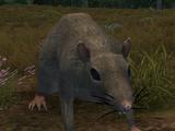 Enemy: Forest Rat