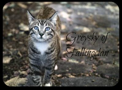 Greysky of Fallingclan