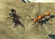 FO4 Overgrown Forager Ant