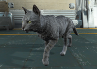Fo4 Ashes