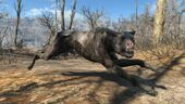 FO4 Vicious mongrel