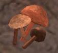 Cave fungus.jpg