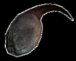 Radscorpion poison gland