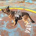 Light dog armor worn.png