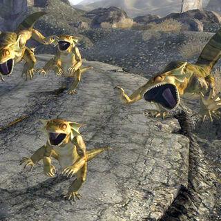 Four golden geckos in full attack.